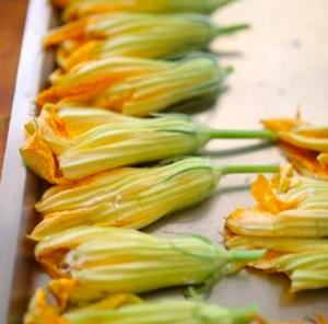Zucchetti-Blüten